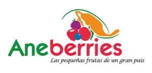 aneberries arandanos